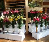 新潟県切り花コンテストに出品します