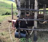ルワンダ農園からのお便り