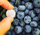 当園の大粒ブルーベリー