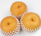 たかはし果樹園の「新高梨」を試食!一口で果汁と笑顔が溢れました!