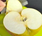 これが訳あり?ヤマヨ果樹園の日本梨「家庭用:新高」を頂きました!