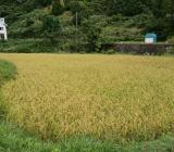 とある日の稲刈り進捗状況