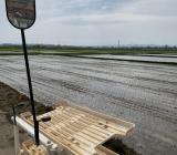 コシヒカリの田植えをしています。