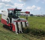 2020 コシヒカリの稲刈り始まりました!