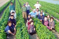 しんどおり茶豆生産組合