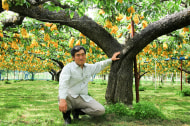 たかはし果樹園