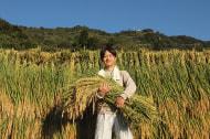 うおぬまのお米農家