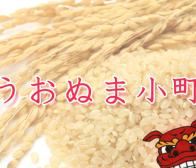 うおぬま小町 玄米粉の炊飯利用