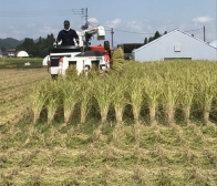 30年産の稲刈りが始まりました。