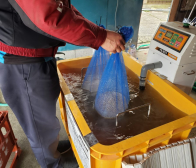 種籾の温湯消毒