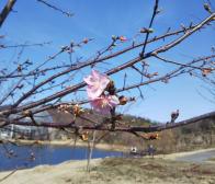 春はもうすぐ…