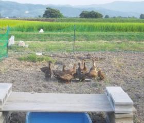 佐渡の高島農場です