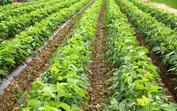 毎年土壌分析を行い健康な土で育てる