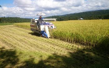 稲作にも力を入れる