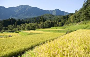 福島県との県境に位置する中山間地でお米を栽培