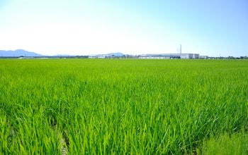越後平野のど真ん中にある永塚農園