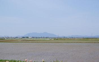 はちしろ枝豆農園