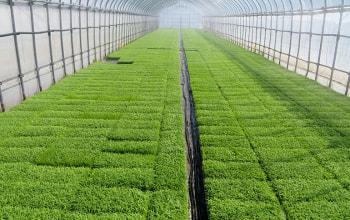 美味しい米作りは良い苗を育てることから始まる