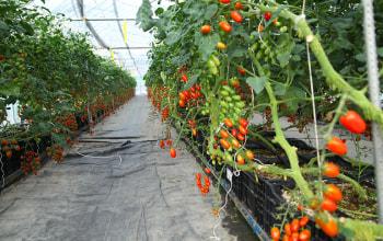 トマトやメロンなどのハウス栽培にも力を入れる