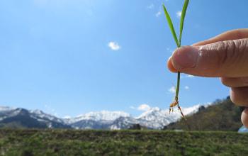 しっかりと根を張れる健康な苗
