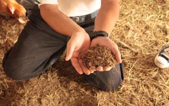 ふっわふっわな発酵している土