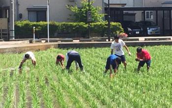 大人と子どもが一緒になって田んぼを作る