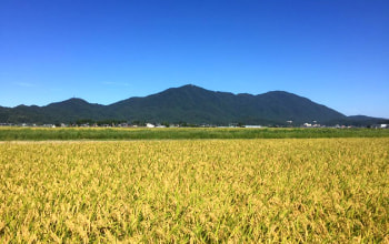 燕市の豊穣な土地から生まれる安心・安全のお米