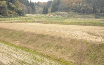 石沢農園の田園風景
