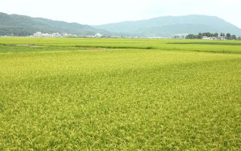 角田山をバックに育ちます