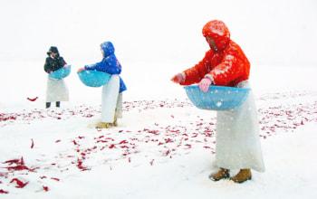 唐辛子を雪さらしにすることで、苦み・辛さの角がなくなり、味わいまろやかに。
