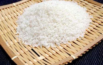 洗わずに炊ける無洗米コシヒカリ「吟精」