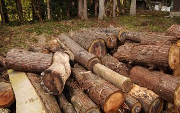 間伐した木
