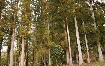 アトリエ周辺の森