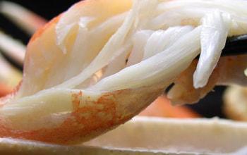 本ズワイガニの調理例1