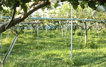 有機肥料にこだわって栽培している