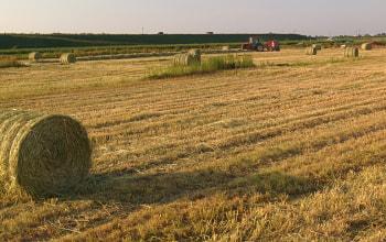 牛のエサとなる牧草は無農薬で自ら栽培