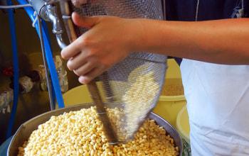 時期によって、一番いい物を選んで使うという丸大豆
