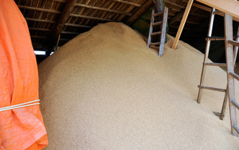 脱穀時の籾殻も、堆肥に再利用。