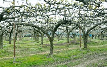 西村果樹ガーデン