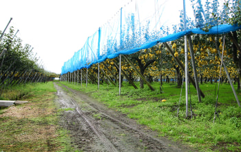 広大な面積を誇る農園