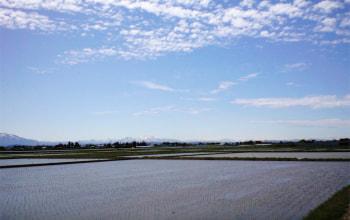 太陽の光を一杯浴びて、お米もすくすく育つ広大な農園