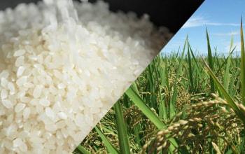 減化学肥料・減農薬、大きな粒が自慢の利兵衛の美味しいコシヒカリ