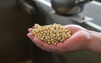 3種類の大豆をブレンド