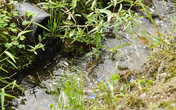 ミネラル豊富な山の雪解け水、飲料水にもなる自然湧水のみを使用
