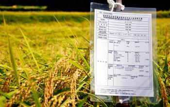 減農薬・減化学肥料、割合50%の新潟県特別栽培米の認可済み
