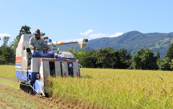 津南町で稲作を行う