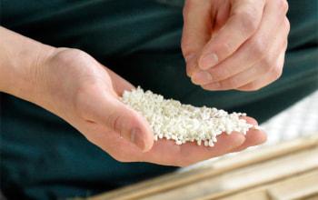 こちらの酒米をじっくりと発酵させることで、美味しい美味しい高野酒造の日本酒へ