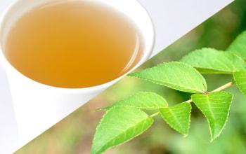 非常にすっきりとした味わいで飲みやすいタラの葉茶