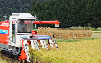 収穫期は一年で最も忙しい時期