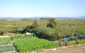 土田農園の農園風景